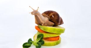 Практика «Неспешность в еде»